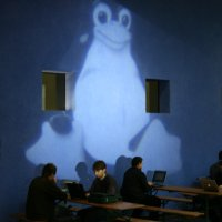 Pinguin-Projektion 2007